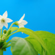 White flower — Stockfoto #26772813