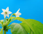 White flower — Foto de Stock
