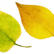 Leaves — Stock Photo #26941345