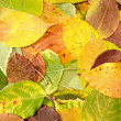 Leaves — Stock Photo #26941515