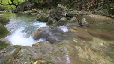 Clean forest water — Stock Video