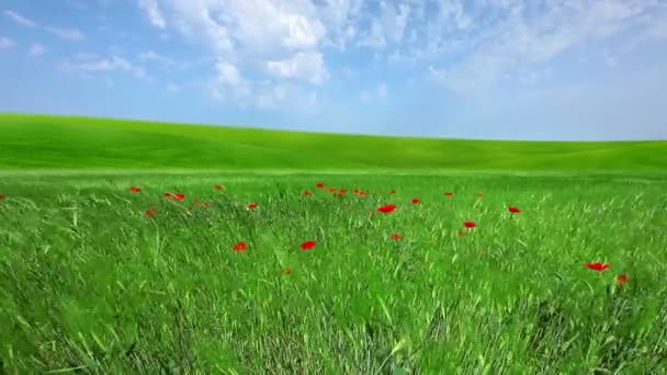 Campo bajo cielo nublado — Vídeo de stock