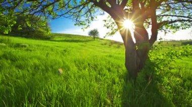Tree in field — Stock Video