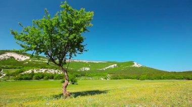 Árbol en campo — Vídeo de Stock