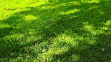 Tree shadows on grass — Stock Video