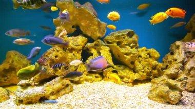 Mercan balıklar — Stok video