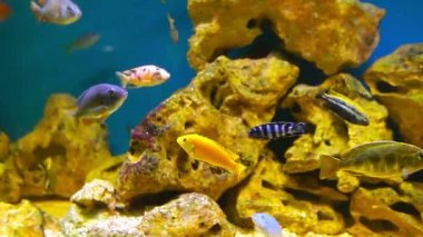Coral fishes — Stock Video