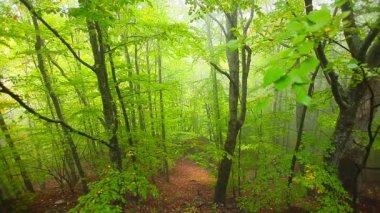 Forêt à feuilles caduques — Vidéo
