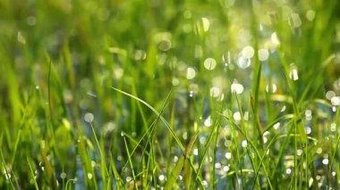Green grass — Stock Video