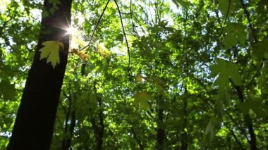 Bosque de septiembre — Vídeo de stock