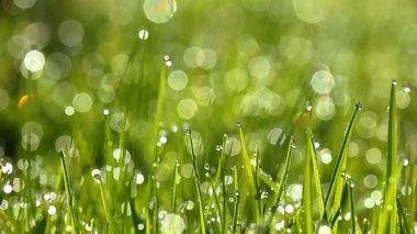 Grüne gras — Stockvideo
