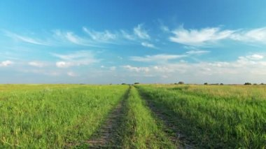 Pathway in field — Vídeo Stock