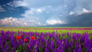 Prado com flores — Vídeo Stock