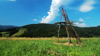 Green summer field — Stock Video