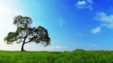 Tree over blue sky — Stock Video
