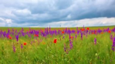 Walking in flowers meadow — Stock Video