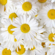 Foto Stock: Field daisies