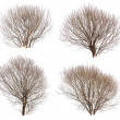 Stock Photo: Leafless bushes collection