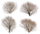Leafless bushes collection — Stock Photo