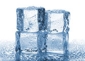 Four melted ice cubes — Stock Photo