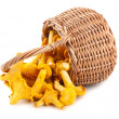 Sprinkled basket with mushrooms — Stock Photo