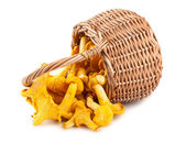 Sprinkled basket with mushrooms — Stock Photo