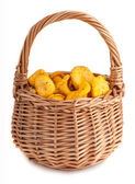 Wicker basket with chanterelle mushrooms — Stock Photo