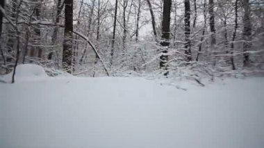 Kameran flyttar i vinter skogen — Stockvideo