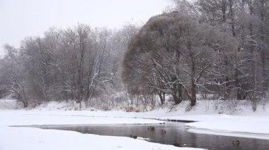 Ducks in winter near the river — Stock Video