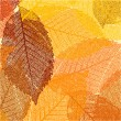 Dry autumn leaves template. EPS 8 -  