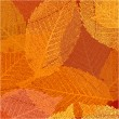 Dry autumn leaves template. EPS 8 — Stockvektor