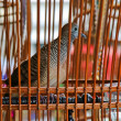 Bird in the cage on background — Stock Photo