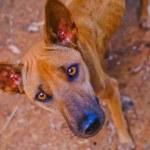 Dog. dog on background — Stock Photo
