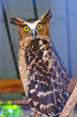 Owl with background — Stock Photo