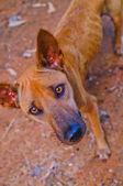 собака. собака на фоне — Стоковое фото
