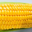 Yellow sweet corn on the background — Stock Photo