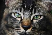 背景上の猫 — ストック写真