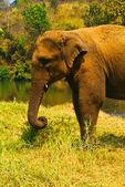 Elephant. elephant on background — Stock Photo