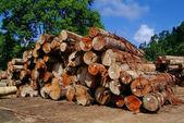 Lumber. Wood stacked — Photo