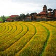 Bali Indonesia. Green rice fields on Bali island — Stockfoto #42577191