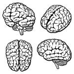 cervello umano — Vettoriale Stock