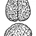 cervello. viste superiore e laterale — Vettoriale Stock  #5404705