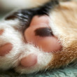 Stock Photo: Cat paw