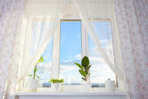 Window with plants. Schefflera , ficus , violet. — Stock Photo