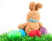 Tavşan ve Paskalya yumurta çayır on — Stok fotoğraf