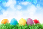Row of Easter eggs in Fresh Green Grass — Stock Photo