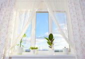 Window with plants. Schefflera , ficus , violet. — Stock Photo