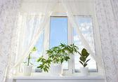 Image de la fenêtre et rideau dans la chambre — Photo
