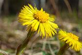 цветок весны — Стоковое фото