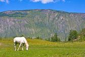 Whire 古い馬の谷 — ストック写真